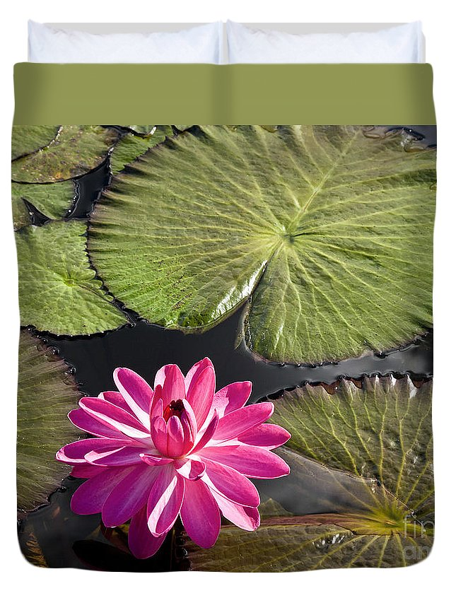 Water Llilies Duvet Cover featuring the photograph Pink Water Lily II by Heiko Koehrer-Wagner