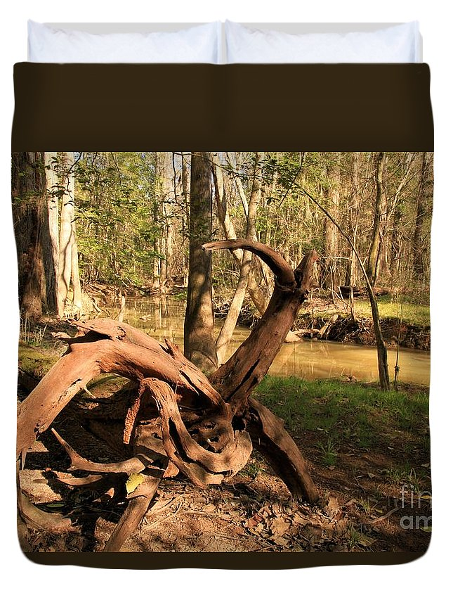 Congaree National Park Duvet Cover featuring the photograph Pinwheel by Adam Jewell