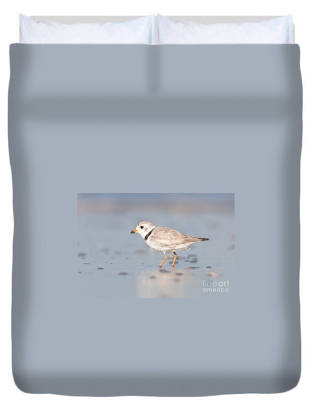 Clarence Holmes Duvet Cover featuring the photograph Piping Plover II by Clarence Holmes