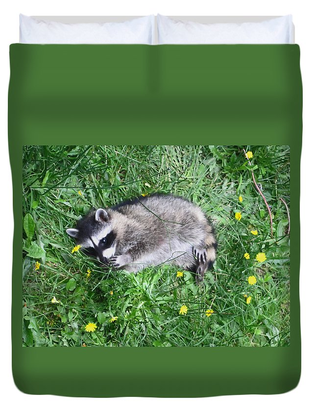 Animals Duvet Cover featuring the photograph Please Dont Eat The Daisy by Kym Backland