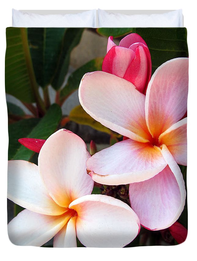 Flower Duvet Cover featuring the photograph Plumeria by Kelly Holm