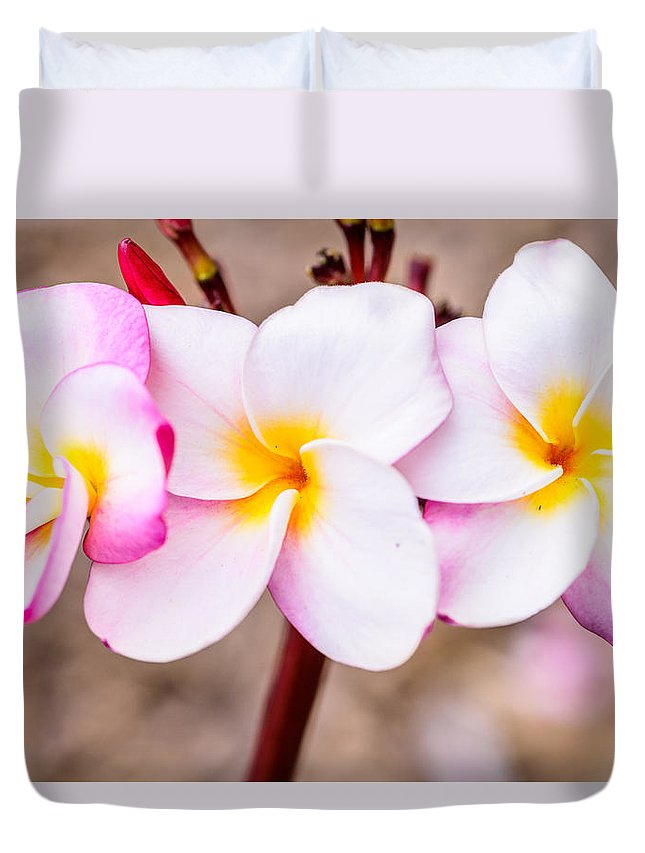 Flowers Duvet Cover featuring the photograph Plumerias Of Paradise 10 by Jason Chu