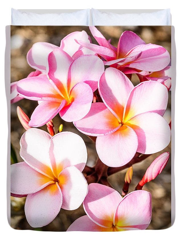 Flowers Duvet Cover featuring the photograph Plumerias Of Paradise 2 by Jason Chu
