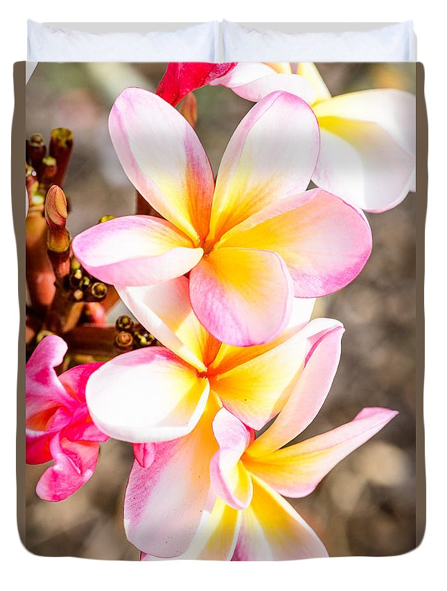 Flowers Duvet Cover featuring the photograph Plumerias Of Paradise 4 by Jason Chu