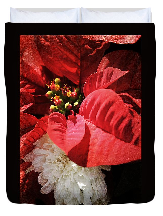 Christmas Duvet Cover featuring the photograph Poinsettia In Bloom by Robin Lewis