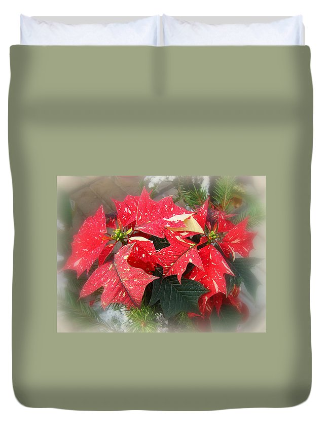 Poinsettia Duvet Cover featuring the photograph Poinsettia In Red And White by Mother Nature