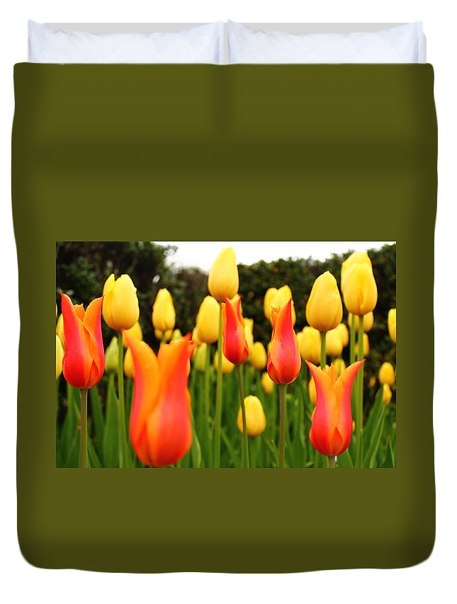 Yellow Duvet Cover featuring the photograph Pointy Tulips by Catie Canetti