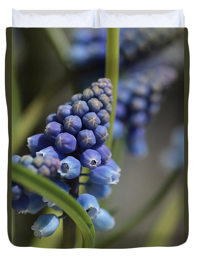 Grape Hyacinth Duvet Cover featuring the photograph Pole Dancing by Connie Handscomb