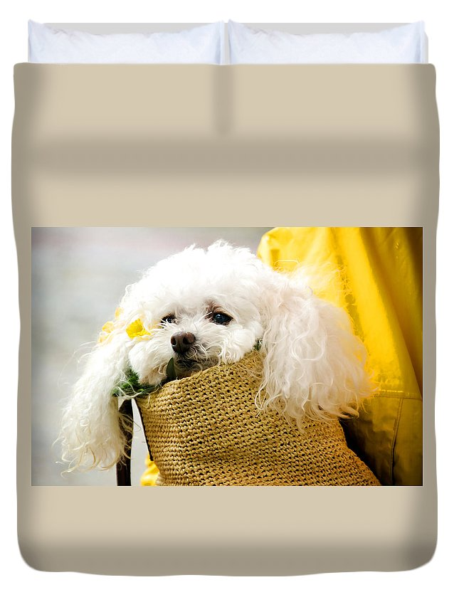 Animal Duvet Cover featuring the photograph Poodle In Pouch by Donna Doherty