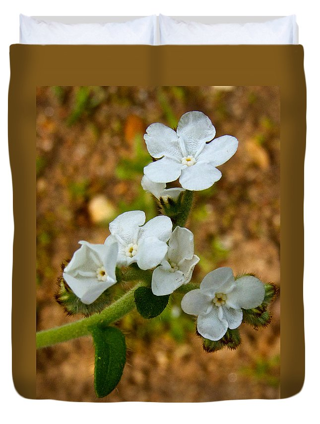 Popcorn Flower Duvet Cover featuring the photograph Popcorn Flower In Park Sierra-ca by Ruth Hager