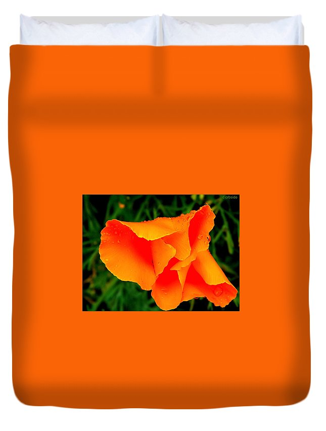 Poppy Duvet Cover featuring the photograph Poppy Dew by Chris Berry