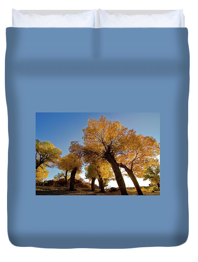 Tranquility Duvet Cover featuring the photograph Populus And Sunshine by Welcome To Buy The Image If You Like It!