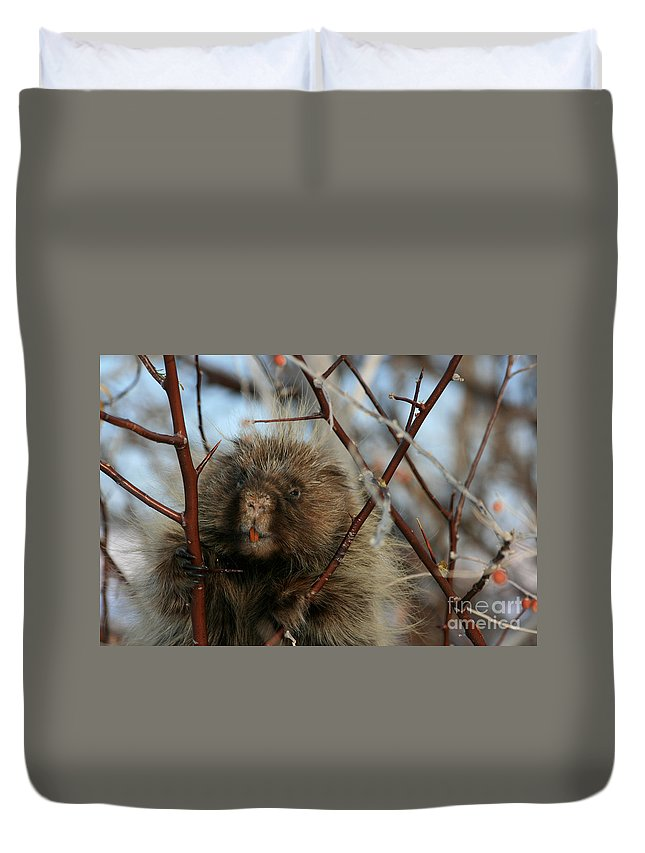 Porcupine Duvet Cover featuring the photograph Porcupine And Berries by Marty Fancy