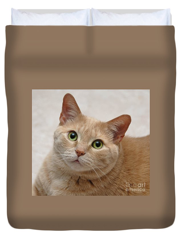 Alert Duvet Cover featuring the photograph Portrait - Orange Tabby Cat by Amy Cicconi