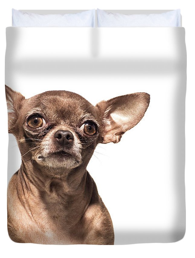 Pets Duvet Cover featuring the photograph Portrait Of A Chocolate Chihuahua - The by Amandafoundation.org