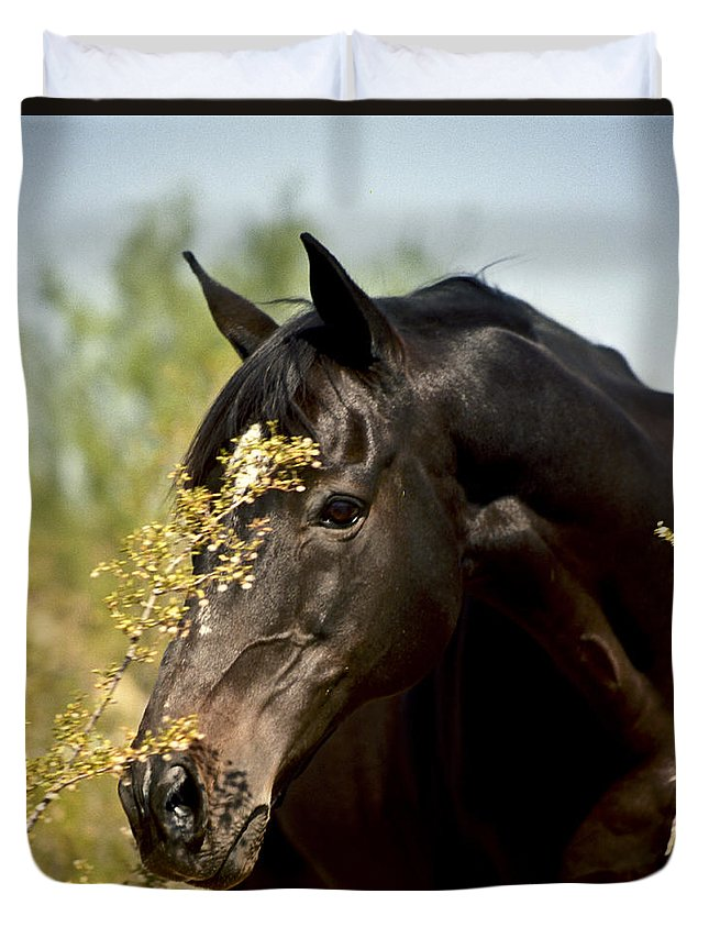 Horse Duvet Cover featuring the photograph Portrait Of A Thoroughbred by Kathy McClure