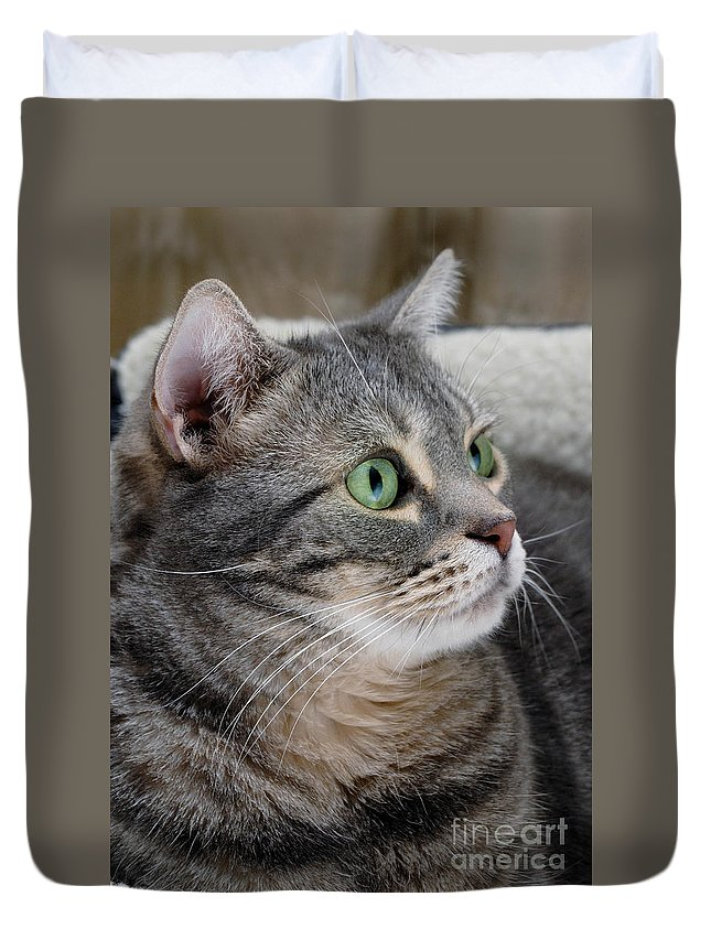 American Shorthair Duvet Cover featuring the photograph Portrait Of An Ameriican Shorthair Cat by Amy Cicconi