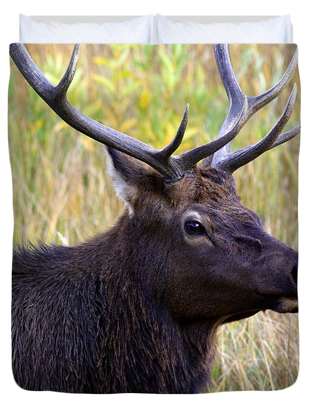 America Duvet Cover featuring the photograph Portrait Of An Elk by Karen Lee Ensley