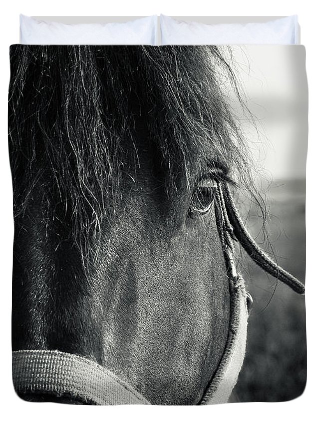 Animal Duvet Cover featuring the photograph Portrait Of Horse In Black And White by Peter v Quenter