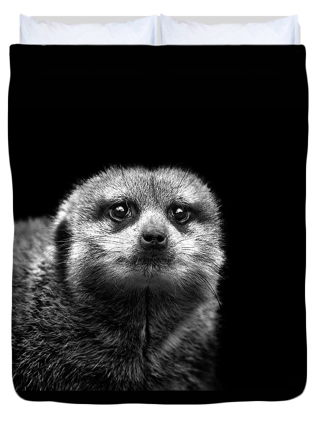 Alertness Duvet Cover featuring the photograph Portrait Of Meerkat by Malcolm Macgregor