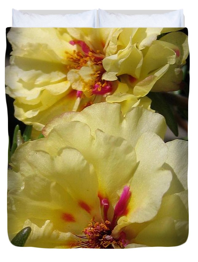 Mccombie Duvet Cover featuring the photograph Portulaca Named Happy Hour Banana by J McCombie
