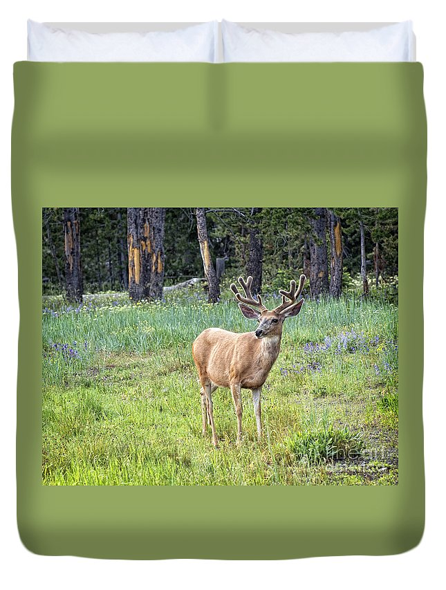 Antlers Duvet Cover featuring the photograph Posing by Claudia Kuhn
