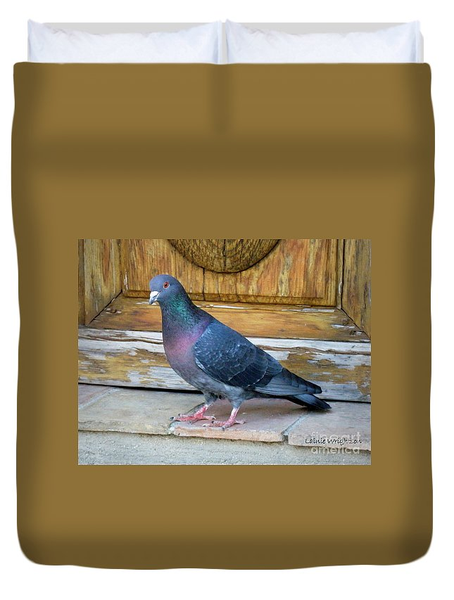 Pigeon Duvet Cover featuring the photograph Posing Pigeon by Lainie Wrightson