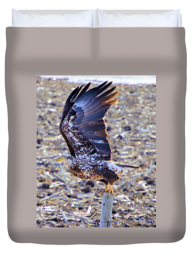 Bald Eagle Duvet Cover featuring the photograph Posted by Bonfire Photography