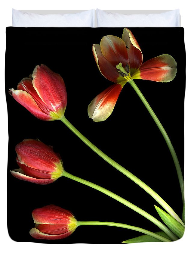 Scanography Duvet Cover featuring the photograph Pot Of Tulips by Christian Slanec
