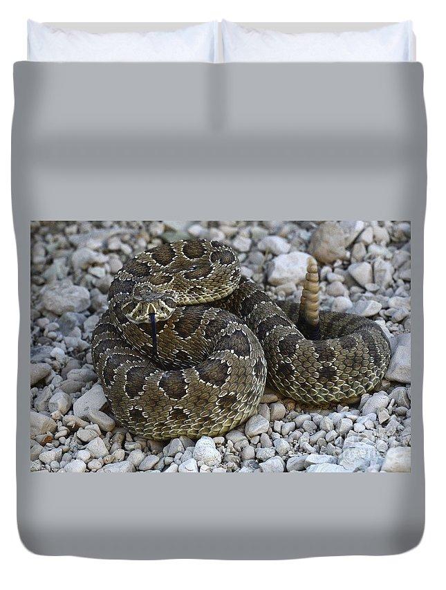 Rattlesnake Duvet Cover featuring the photograph Prairie Rattlesnake South Dakota Badlands by Bob Christopher