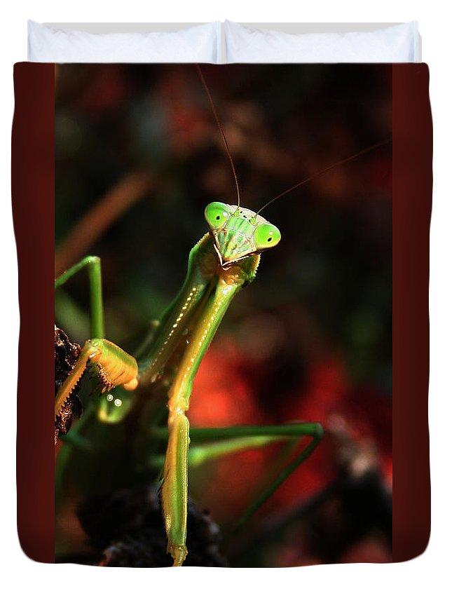 Praying Mantis Duvet Cover featuring the photograph Praying Mantis Portrait by Linda Sannuti
