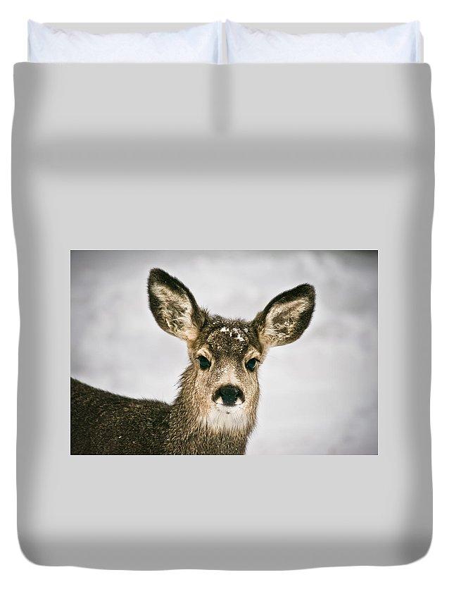 Casper Mountain Duvet Cover featuring the photograph Precious - Mule Deer Fawn - Casper Mountain - Casper Wyoming by Diane Mintle