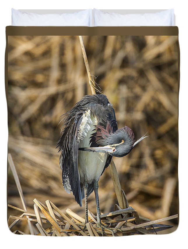 Doug Lloyd Duvet Cover featuring the photograph Preening by Doug Lloyd
