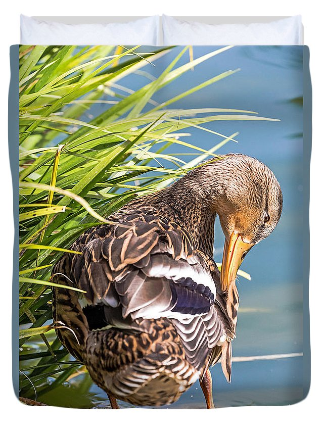 Bird Duvet Cover featuring the photograph Preening by Kate Brown