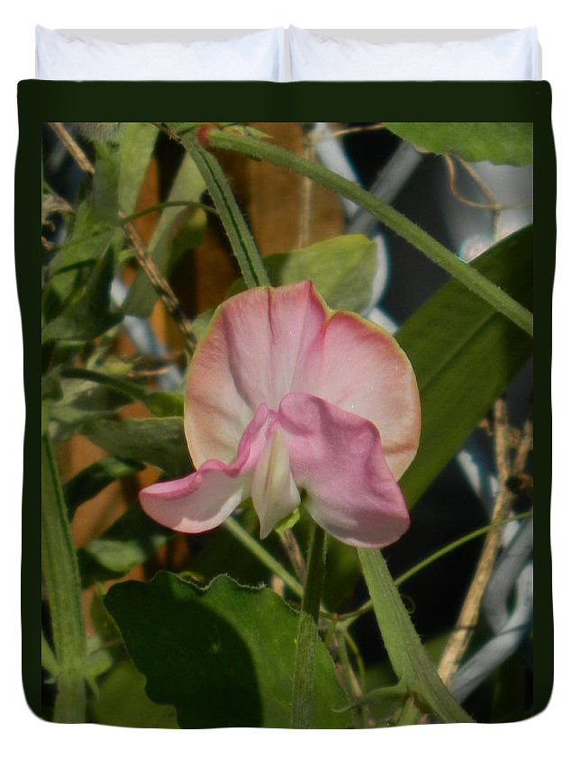 Pretty Duvet Cover featuring the photograph Pretty In Pink Sweet Pea by Nicki Bennett