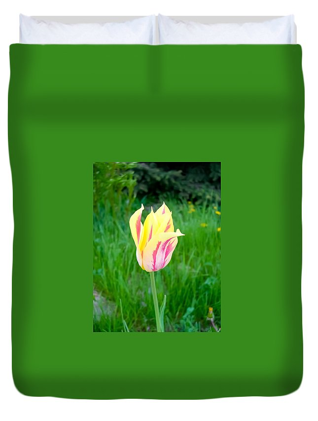 Pretty Pastel Tulip Duvet Cover featuring the photograph Pretty Pastel Tulip by Cynthia Woods