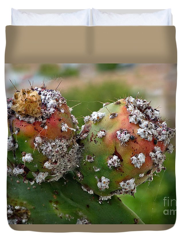 Cochineal Bug Duvet Cover featuring the photograph Prickly Pear With Cochineal Bugs by Anthony Mercieca