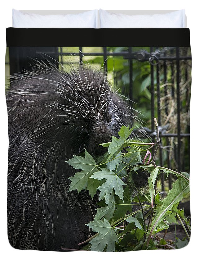Porcupine Duvet Cover featuring the photograph Prickly Pete by Jayne Gohr