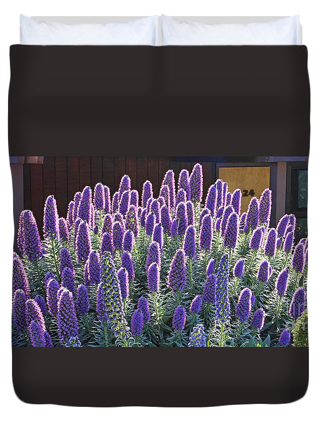 Pride Of Madeira Duvet Cover featuring the photograph Pride Of Madeira 7162 by Jack Schultz
