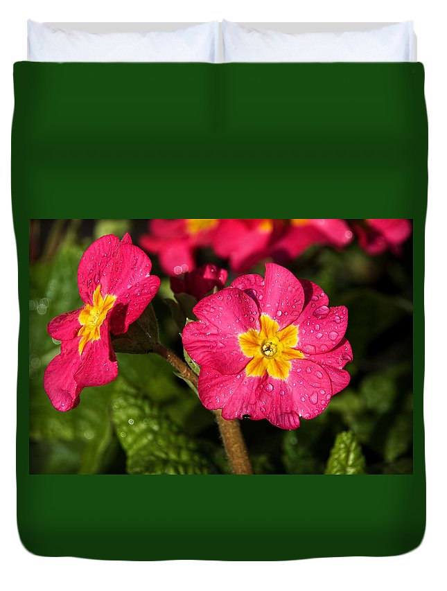 Primulas Duvet Cover featuring the photograph Primulas by Susie Peek