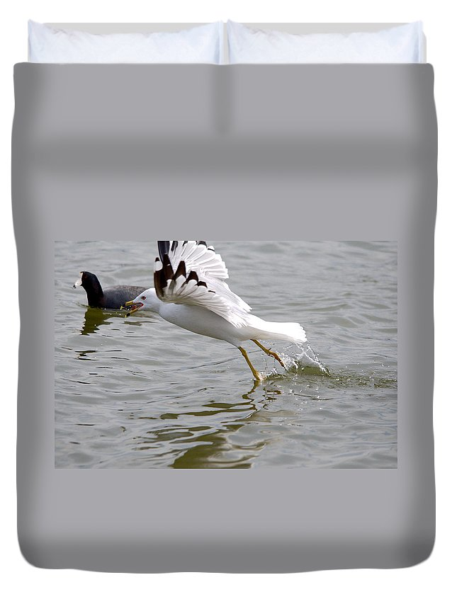 Roy Williams Duvet Cover featuring the photograph Prize Is Secured by Roy Williams