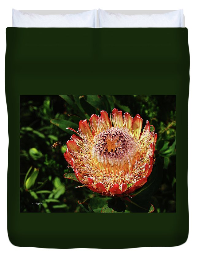Protea Duvet Cover featuring the photograph Protea Flower 2 by Xueling Zou