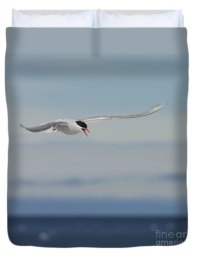 Antarctic Tern Duvet Cover featuring the photograph Protective.. by Nina Stavlund