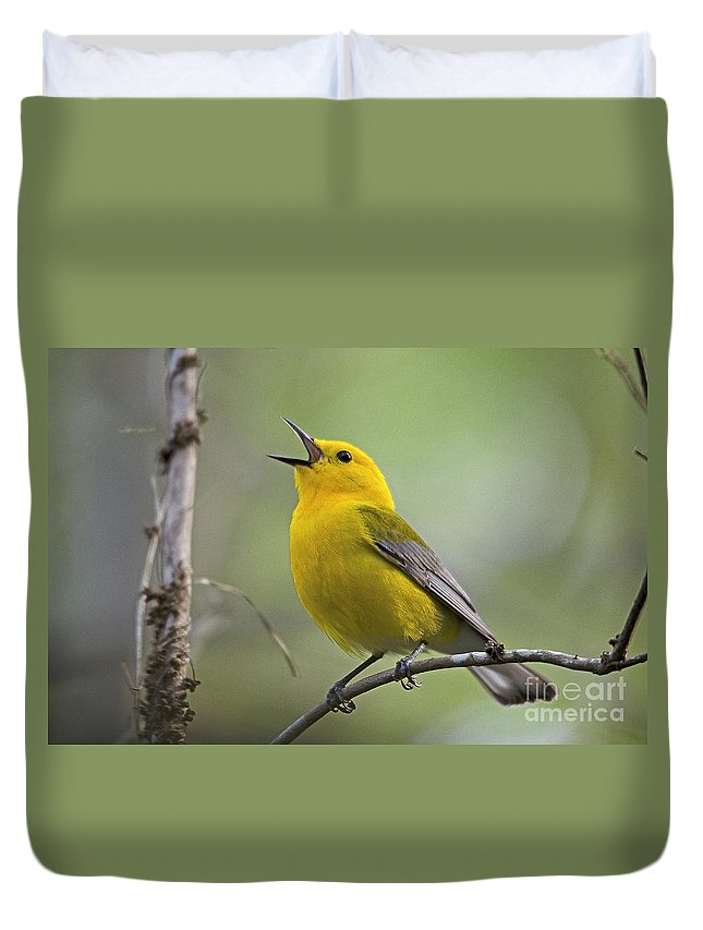 Bird Duvet Cover featuring the photograph Prothonotary Wabler by TJ Baccari