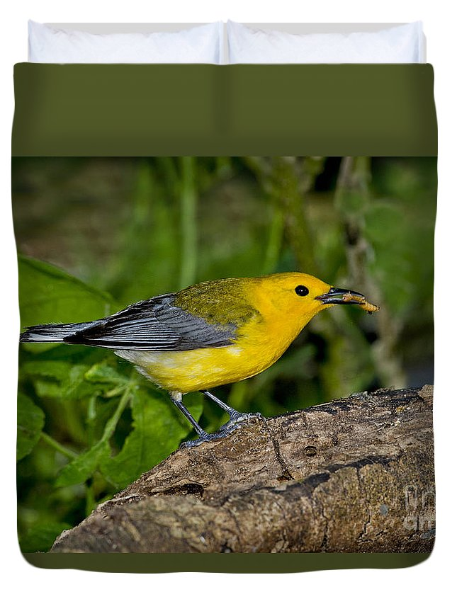Prothonotary Warbler Duvet Cover featuring the photograph Prothonotary Warbler by Anthony Mercieca