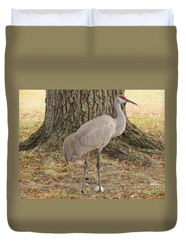 Sandhill Crane Duvet Cover featuring the photograph Proud Of First Egg by Zina Stromberg