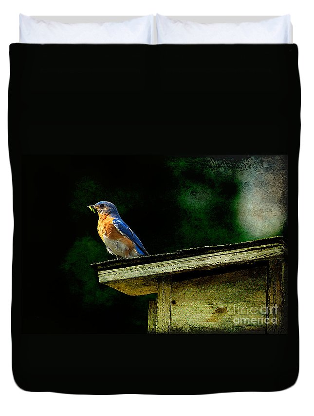 Lois Bryan Duvet Cover featuring the photograph Proud Provider by Lois Bryan