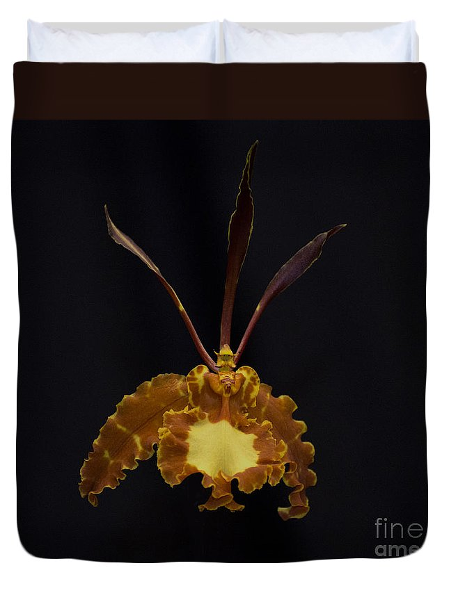 Brown Orchid Duvet Cover featuring the photograph Psychopsis Mariposa 4446 by Terri Winkler
