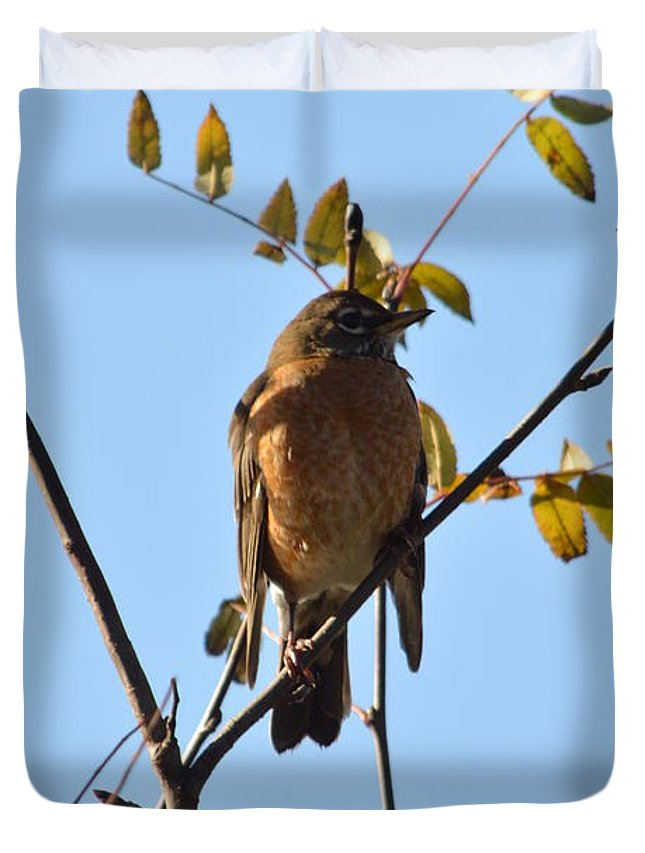Robin Duvet Cover featuring the photograph Puffed Breasted Robin by Nicki Bennett