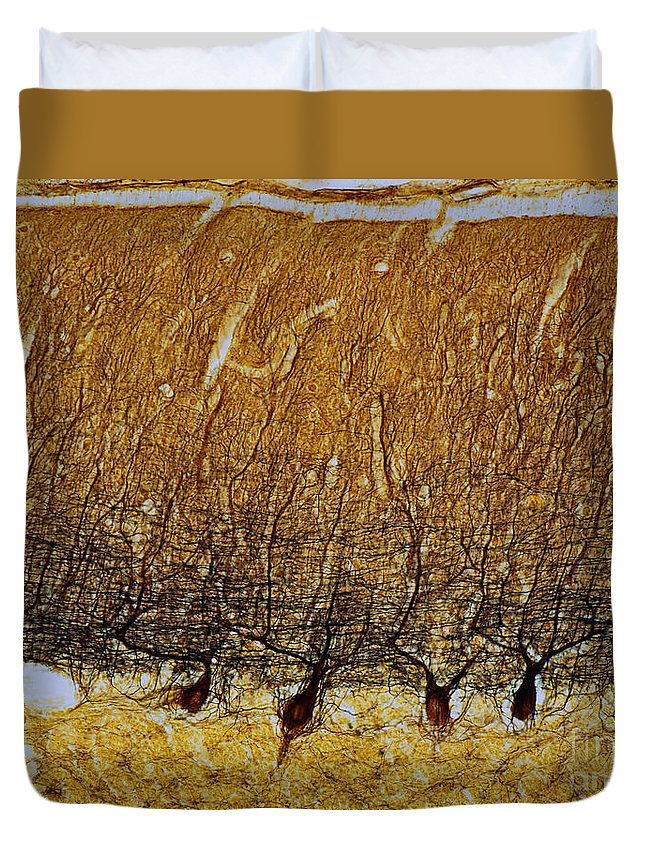 Science Duvet Cover featuring the photograph Pukinje Cells Lm by A and H-F Michler